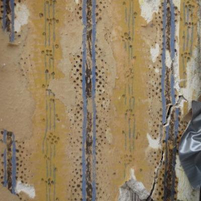 Kleuronderzoek pastorie beverwijk heuft historische binnenruimten - Deco woonkamer behang ...